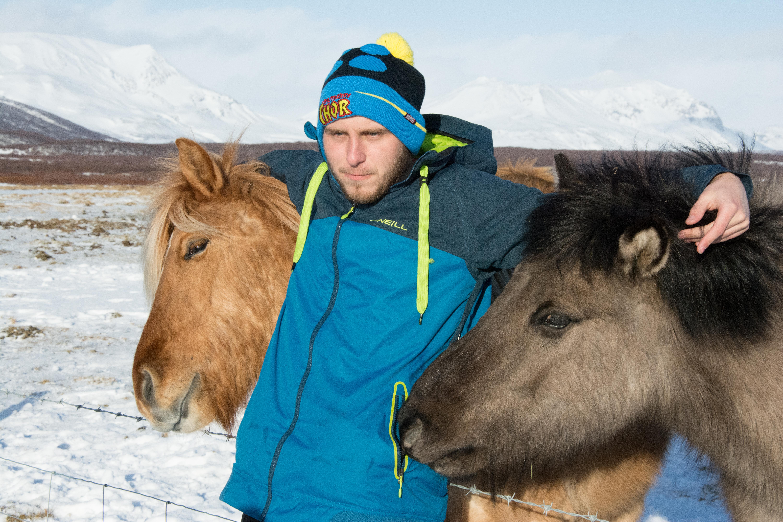 Islandské plemenné kone