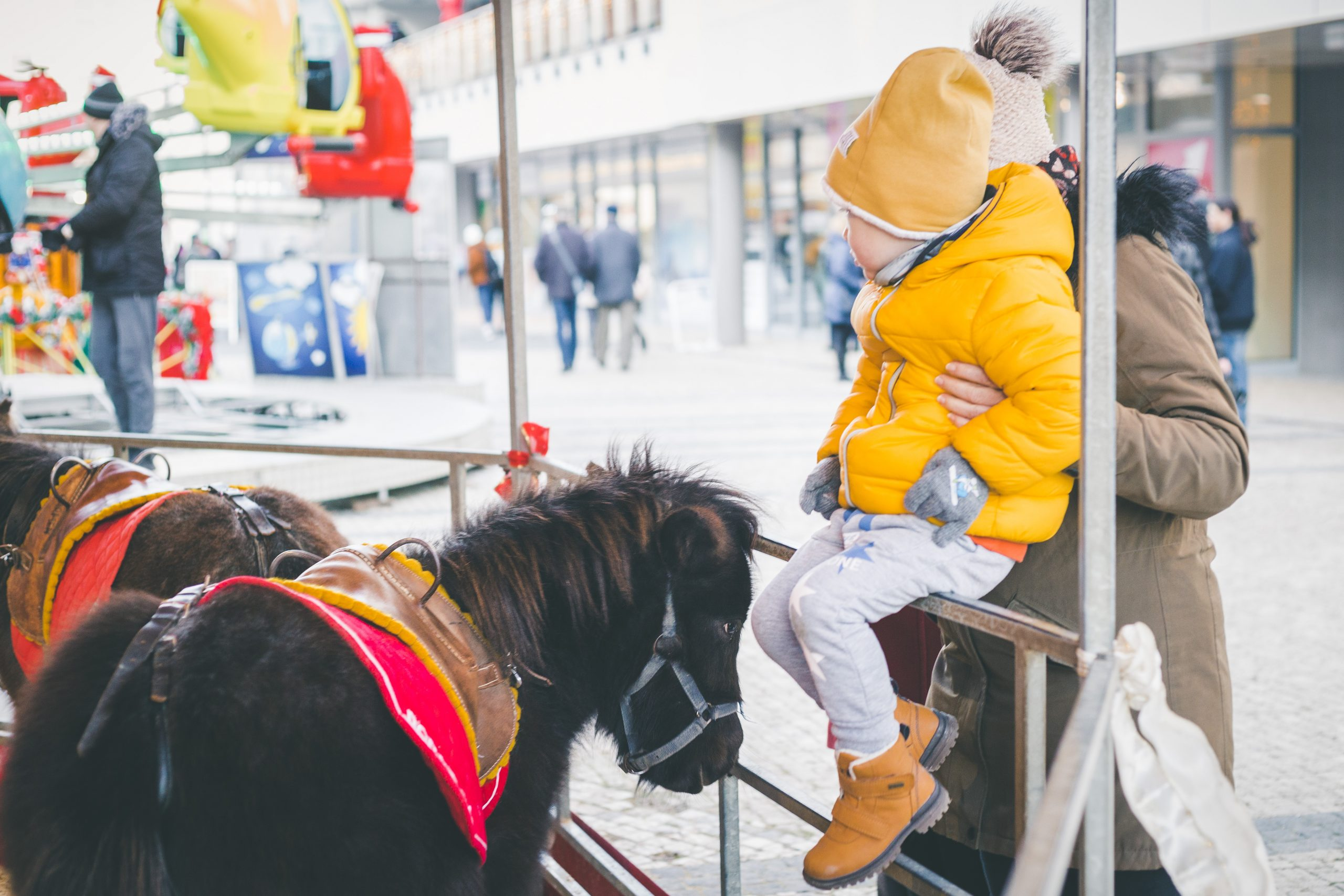 Poníky na vianočných trhoch v Trnave