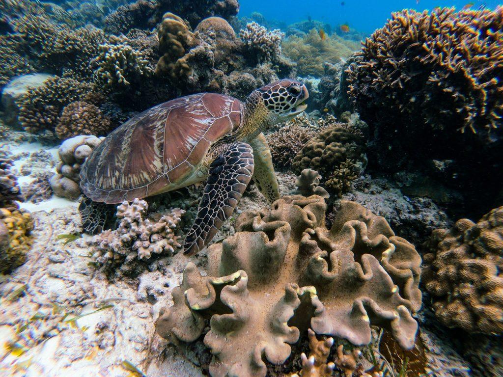 zánik koralových útesov