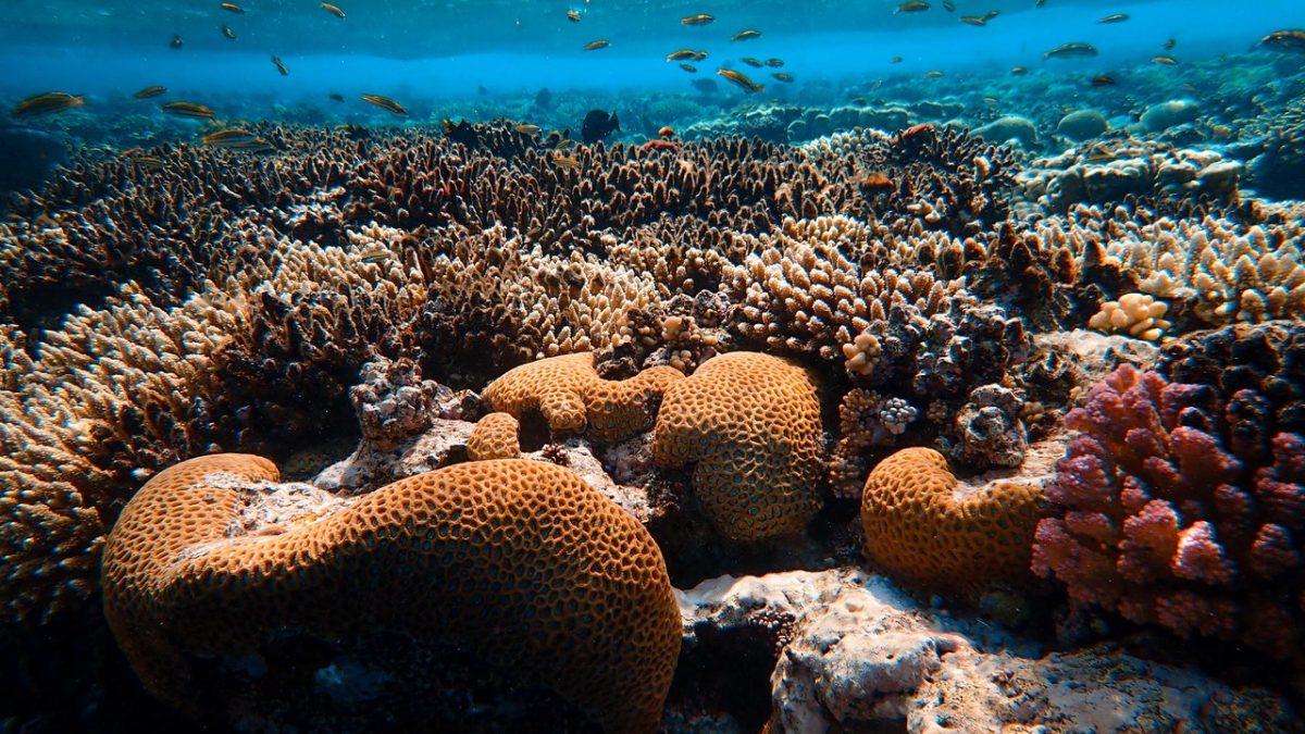 Zániku koralových útesov sa snažia predísť mnohé iniciatívy sveta. Výnimkou nie je ani Slovensko